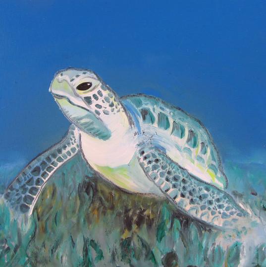 Turtle1_30x24_12.jpg