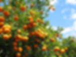 verger-oranger-full-8241006.jpg