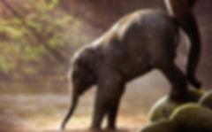 elephant-2380009_1920_quer.jpg