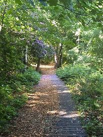 path 4.jpg