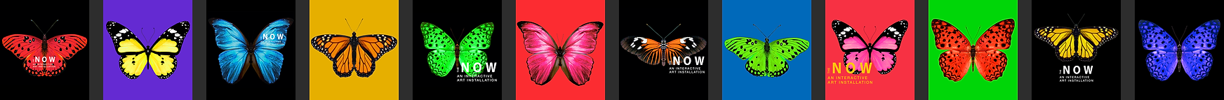 LAYOUT_butterflies.png