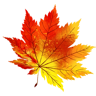 —Pngtree—autumn_and__maple_leaves_40
