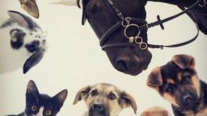 Soins animaux en don libre