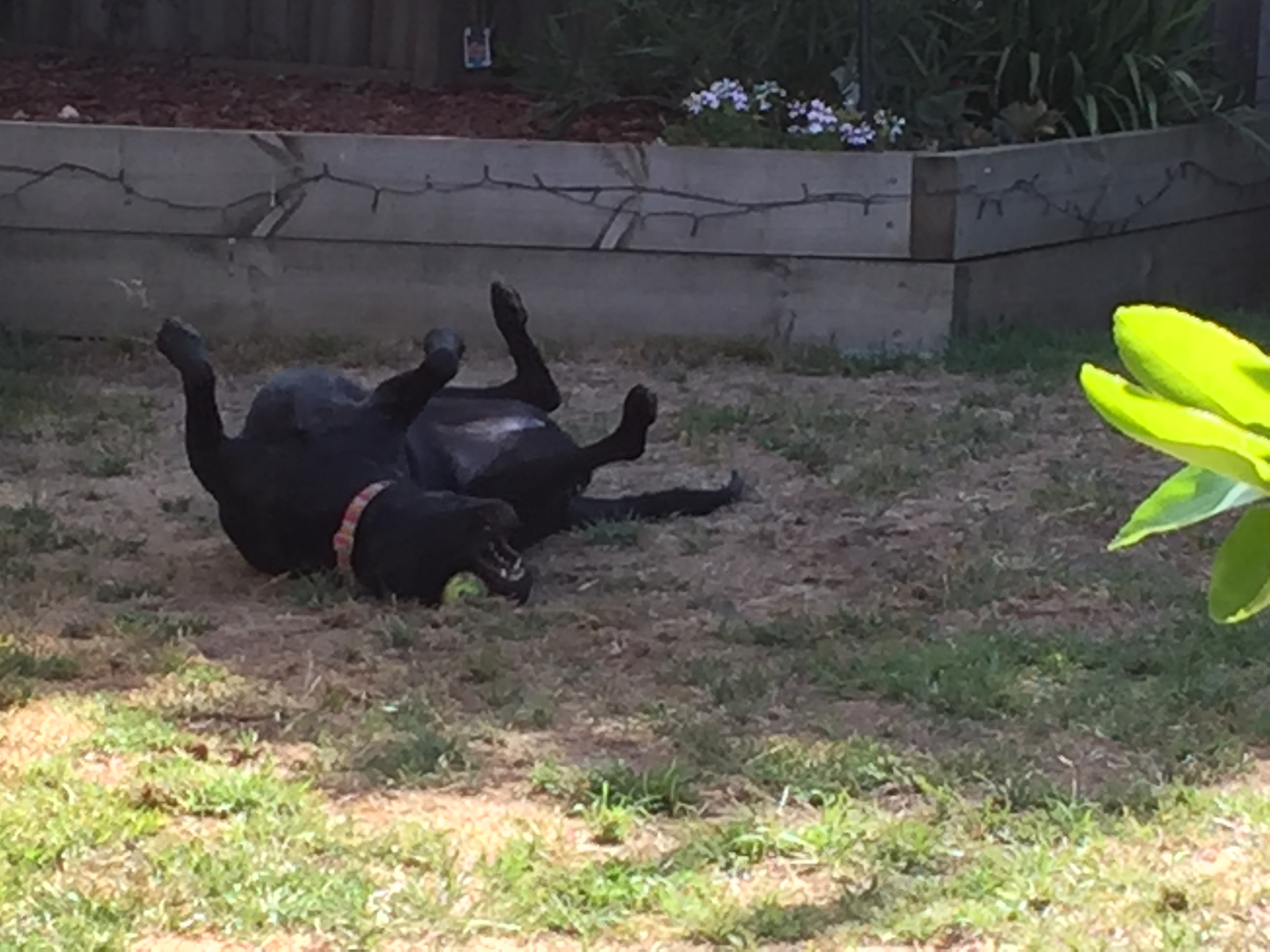 Playtime in the backyard