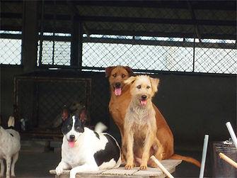 refuge-chiens-ban-obun.jpg