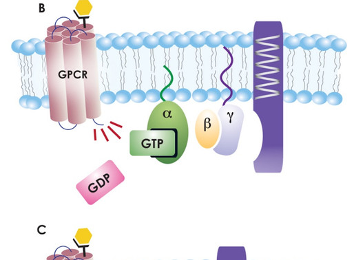 1994 Nobel Prize for the discovery of G proteins in signal transduction
