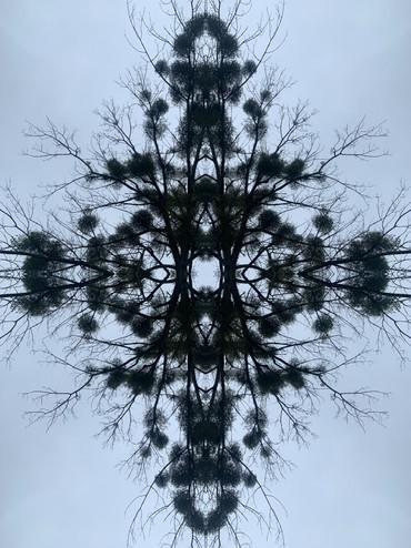 Morphose #8638