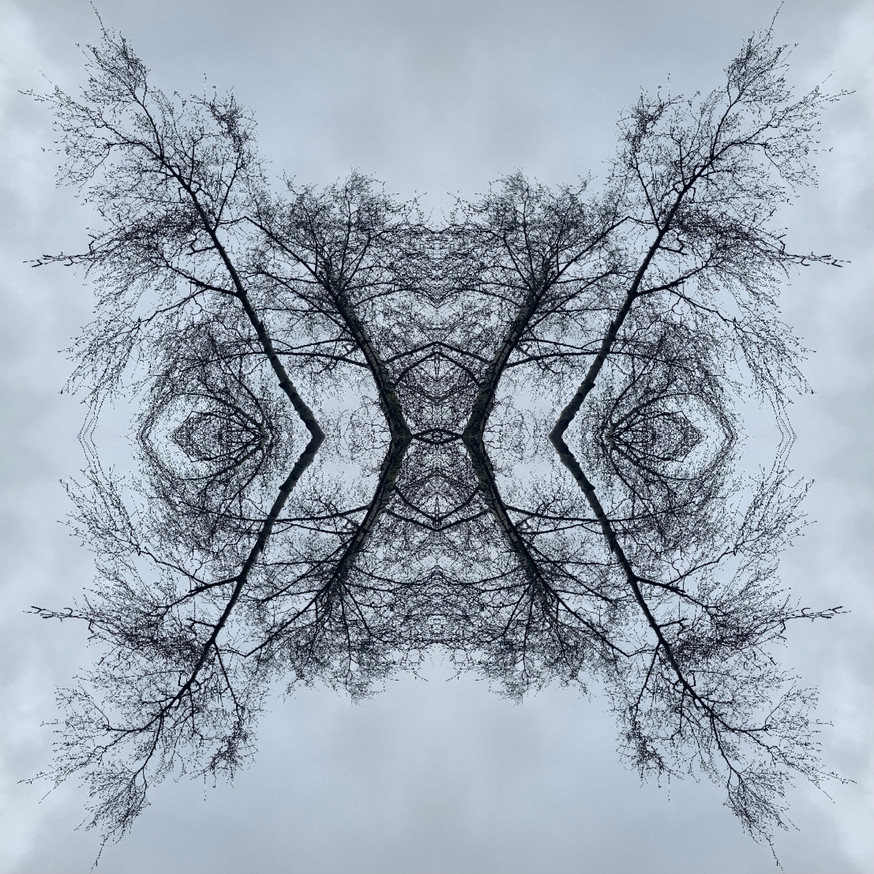Morphose #8733