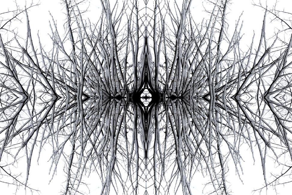 Morphose #1556