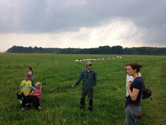 """Aus der Reihe """"Landwirtschaft bei uns im Dorf"""": Mit dem Hütehund WINaufs Weideland"""