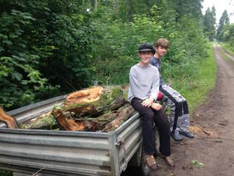 Regelmäßige Malzeiten und Eichenkrone im Wald zersägen und transportieren