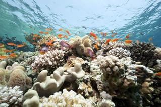 Barbados Coral Reef Symposium 2018