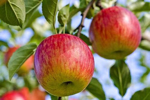 Fuji Apples per kg