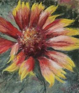 """""""Blanket Flower"""""""