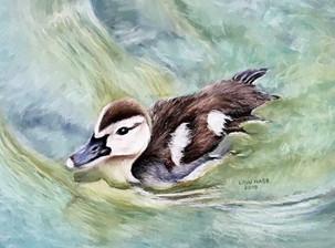"""Duckling Enjoying Freedom"""