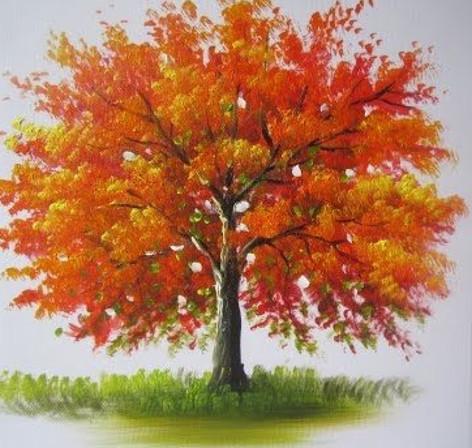 Orange Blossom Tree