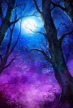 Trees in the Night Sky