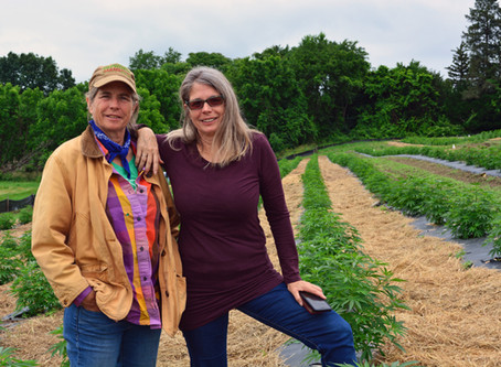 Hempire State Growers Letter of Commitment