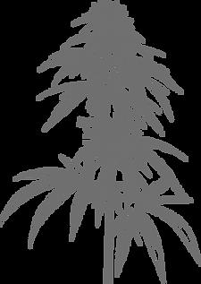 Hemp plant illustration.png