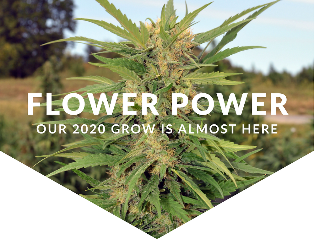 Organic CBD Hemp Flower | Hempire State Growers