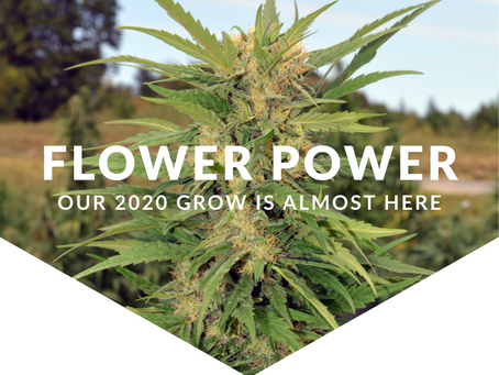 Flower Power: Our 2020 Grow is Almost Here!