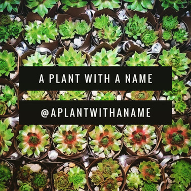 plantwithaname.jpg