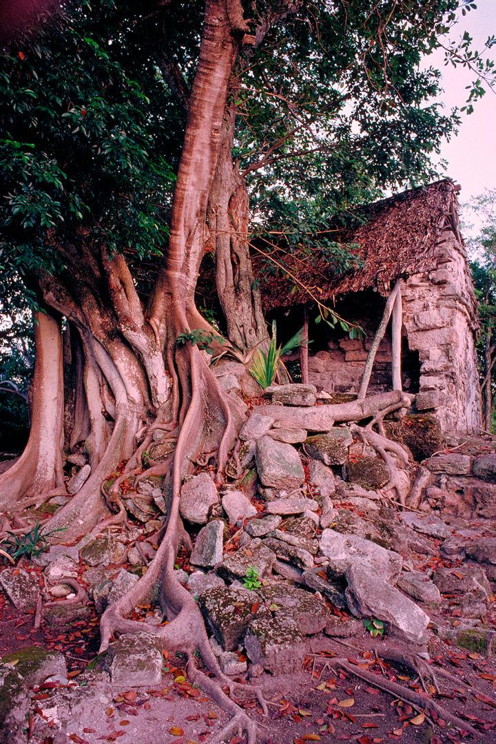 Ruins in Cozumel.jpg