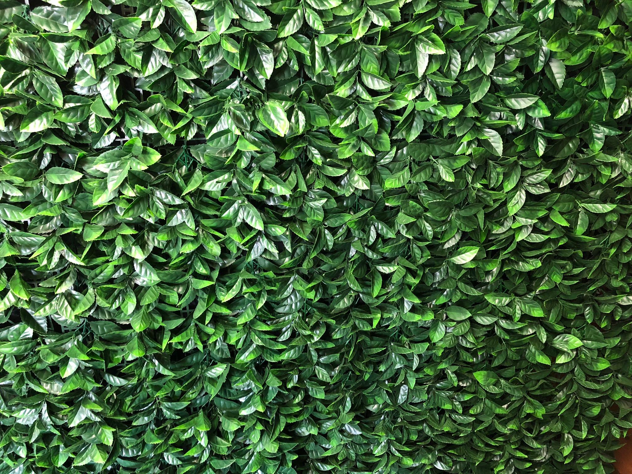 Green Wall Hire
