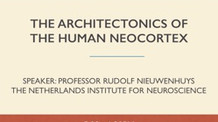 The Architectonics of the Human Neocortex