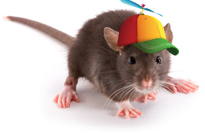 rat_edited
