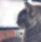 Screen Shot 2019-02-01 at 11.21.02 AM_ed