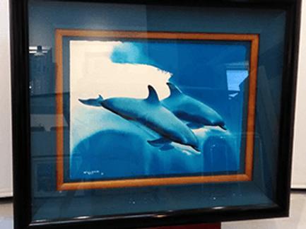 ワイランド Dolphin Experlence
