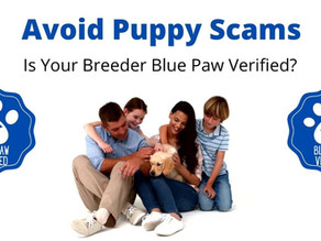 Puppy Scams are Up 500%