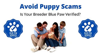 avoid puppy scams