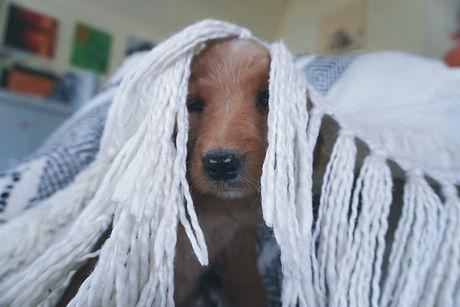 move my new puppy.jpg