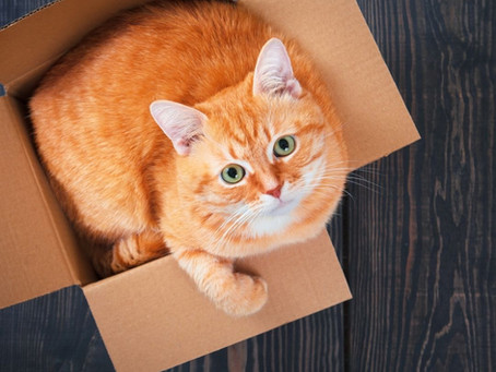 How To Move My Cat