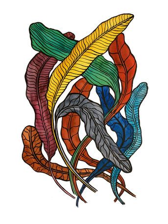 Feathers,  paper, ink, ecoline, watercolour