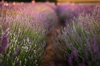 lavender-photoshoot-22.jpg