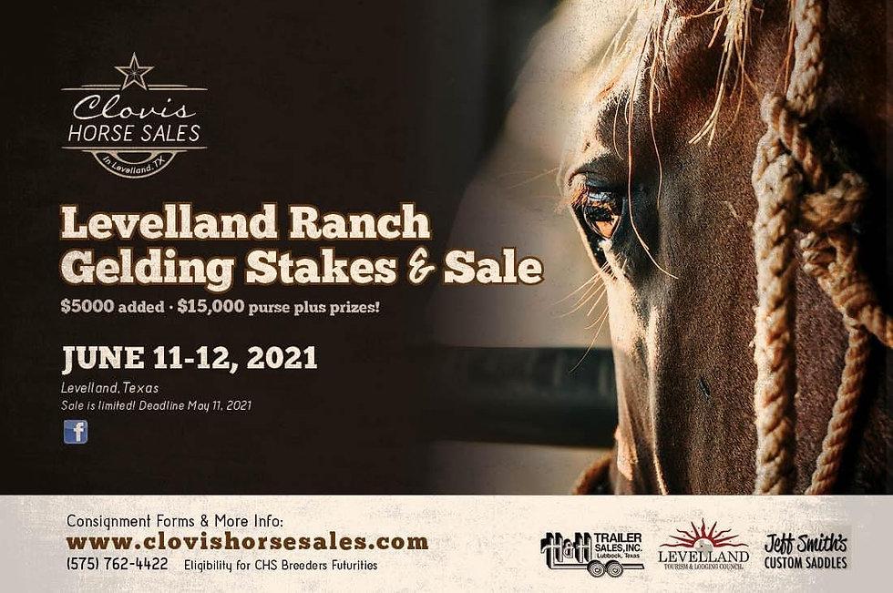 Levelland Ranch Gelding flyer.jpg