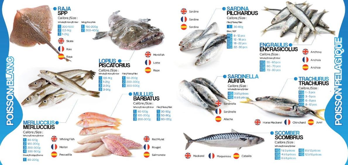 page3brochure lavictoirefish