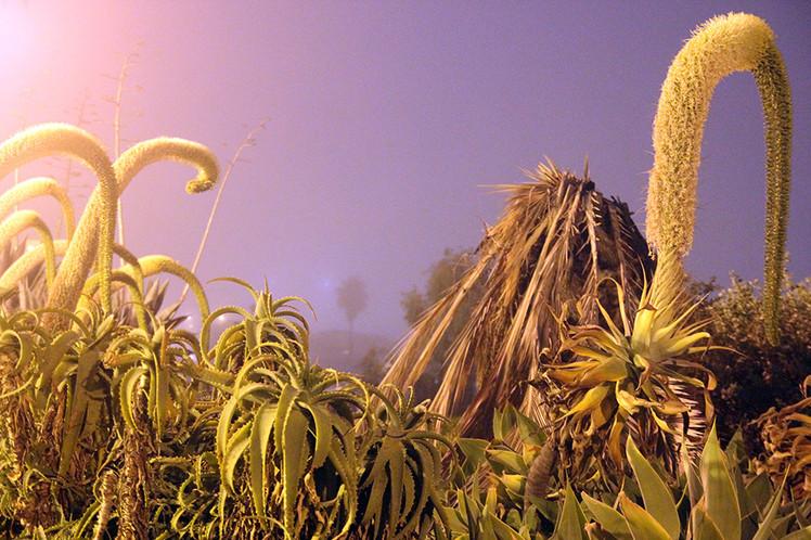 b_Succulents.jpg