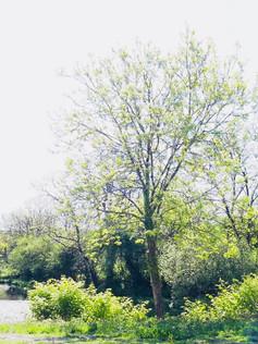 Moreton Farm Lake