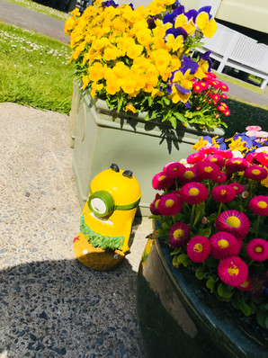 MINIONS @COUNTRYPARK
