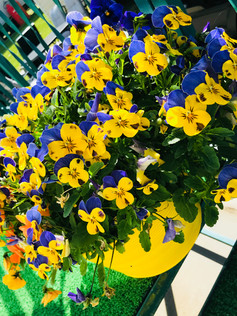 Manorbier in Bloom