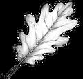 leaf oak-web.png