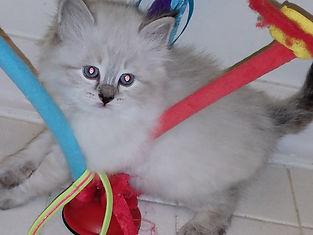 5W.kitten (2).jpg
