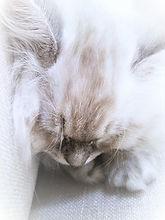 12w.kittennap.jpg