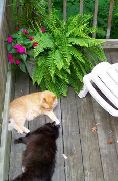 lazing on the deck.jpg
