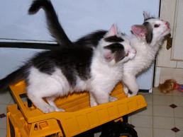 Minka and Mimsy.jpg