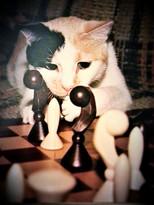 Candy-Chess_edited.jpg